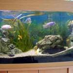 rg_aquarium