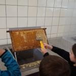 Beim Ausflug in die Uni Hohenheim erlebten die Kinder wie der Honig in das Glas kommt.