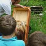 Wie Orgelpfeifen bauen die Wildbienen ihre Waben.